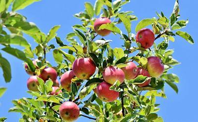 Am Apfelbaum 4 Pers